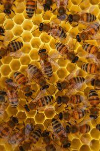 Cera naturale prodotta dalle api nell'alveare