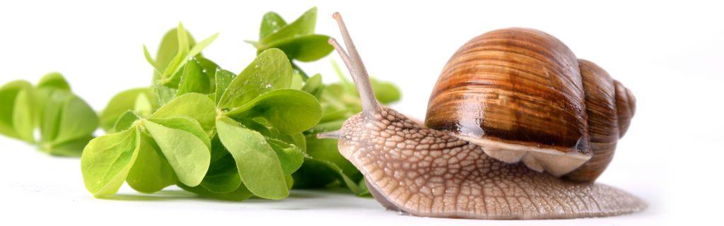 Prodotti cosmetici naturali e biologici alla bava di lumaca - slider